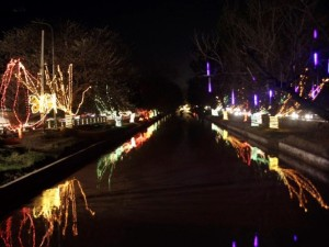 Trees along Lahore canal are illuminated as part of the Jashan-e-Baharan celebrations